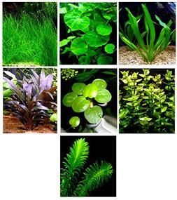 15 Live Aquarium Plants/7 Different Kinds - Amazon Sword, Dw
