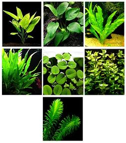 15 Live Aquarium Plants / 7 Different Kinds - Amazon Sword,