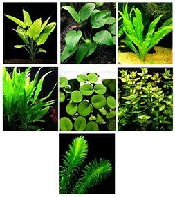 15 Live Aquarium Plants/7 Different Kinds - Custom Combo  Gr