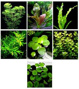 20 Live Aquarium Plants / 7 Different Kinds - Custom Combo