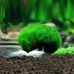 Wffo 3-4cm Marimo Moss Balls Live Aquarium Plant Algae Fish
