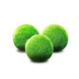 3 Luffy Giant Marimo Moss Balls  : Biological, Natural, Chem