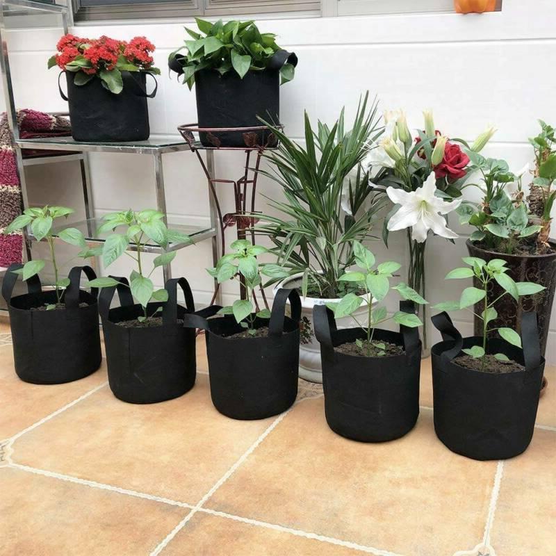 10 Grow 5/10 Gallon Plant W/