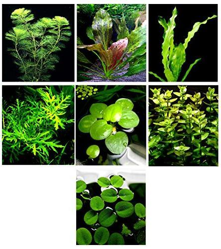 20 Live Aquarium Plants / 7 Different Kinds - Custom Combo