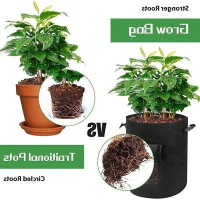 5 Packs Plant Growth 5