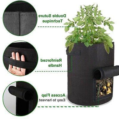 5 Packs Plant 5