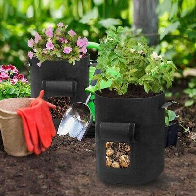 5 Packs of 7-Gallon Plant 5 Plant