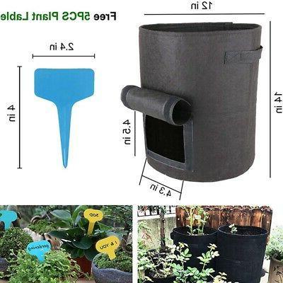 5 Packs Plant Growth 5 Plant