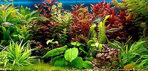 5-7 Aquarium / Planted Tank Supplies, kinds items fertilizer capsules, clay, wraps plant weights