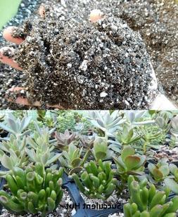 Succulent Cactus Potting Soil 5 CUPS-6 GALLON Fast Draining